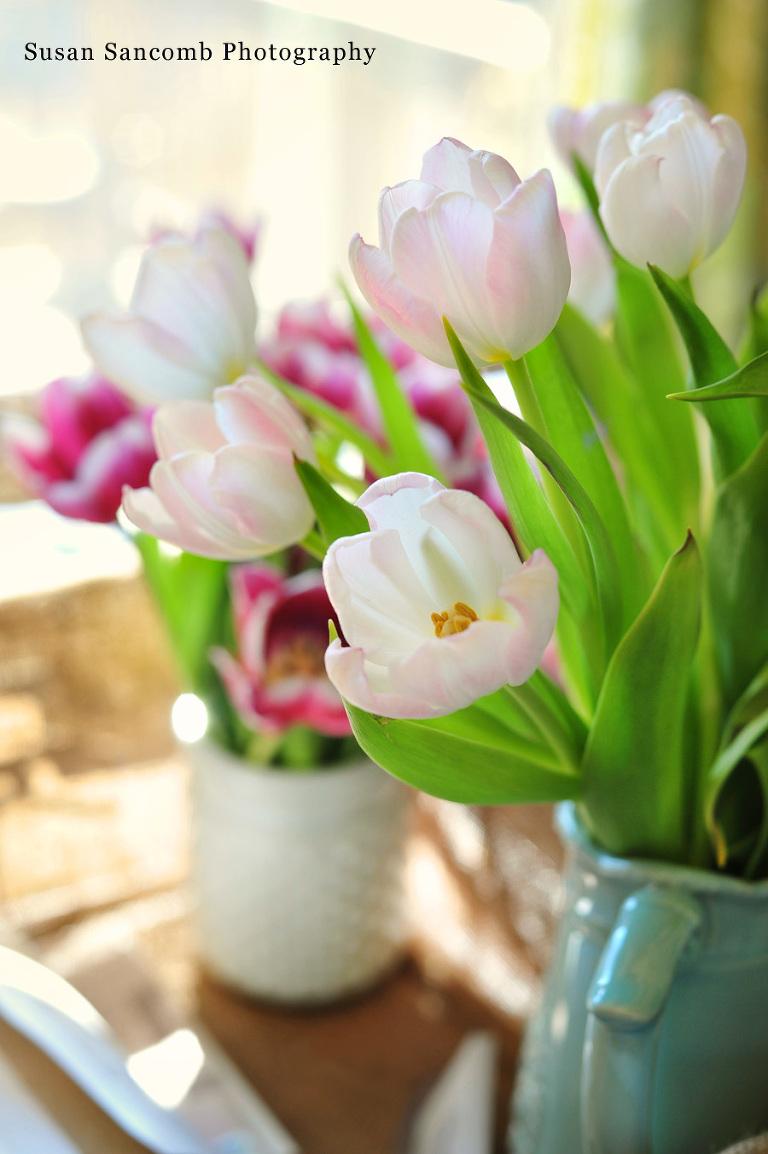 Rhode Island Landscape Photographer, Flowers, tulips